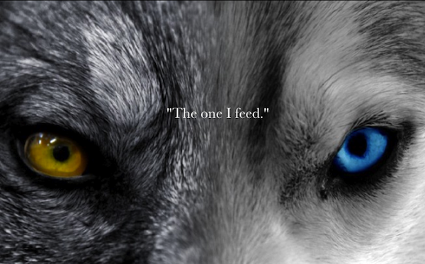 My Desktop Wallpaper Two Wolves Story Wolf Eyes Wolf Quotes