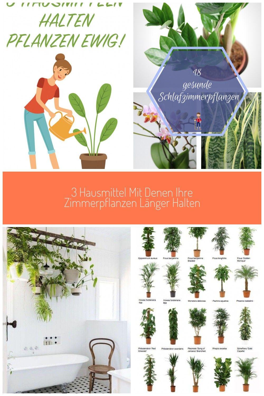3 Hausmittel Mit Denen Ihre Zimmerpflanzen Lnger Halten In 2020 Zimmerpflanzen Pflanzen Schlafzimmer Pflanzen