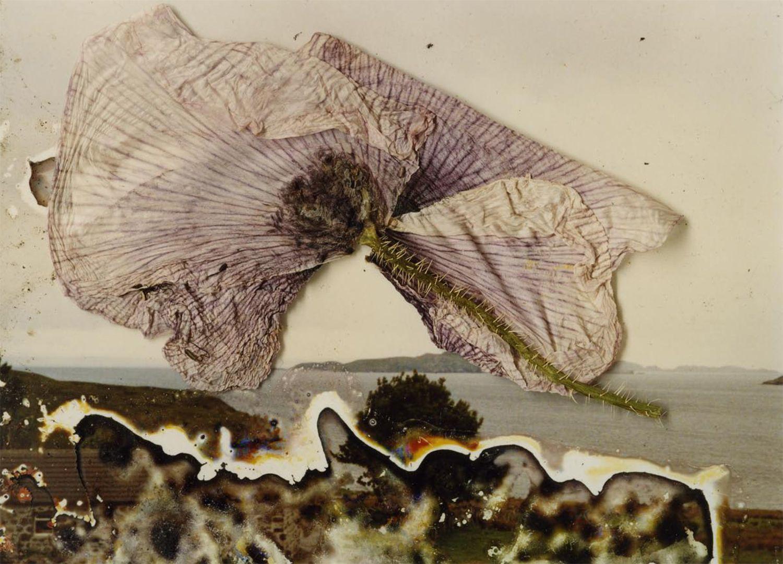 Os trabalhos de Stephen Gill misturam fotografias impressas com substancias e objetos da natureza