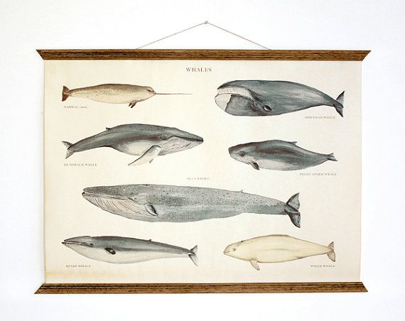 Whales Poster A3 Canvas - handmade vintage inspired educational ...