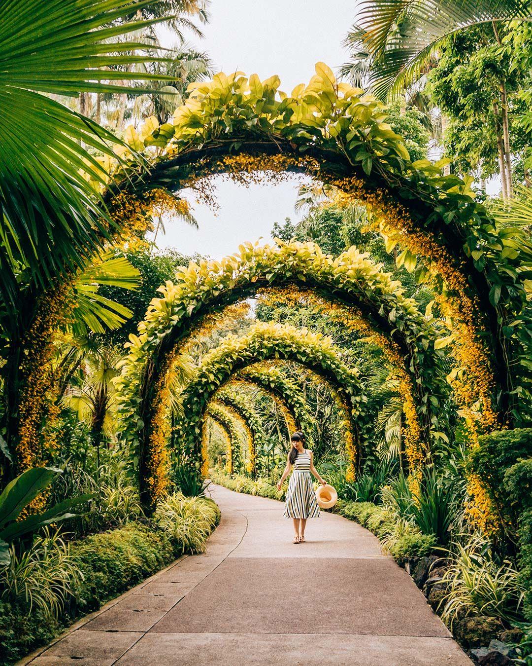 Why You Should Visit the Singapore Botanic Gardens