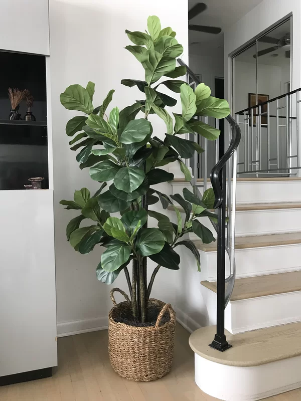 Bayou Breeze Fiddle Leaf Fig Tree with Basket | Wayfair