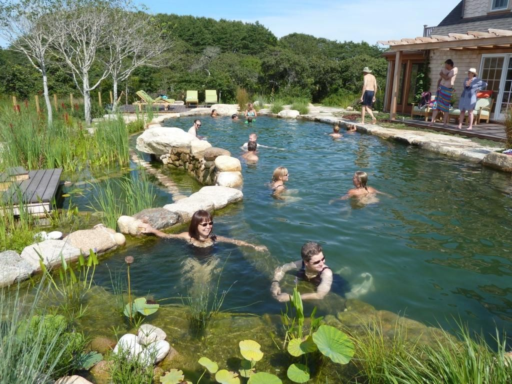 Bionova pools that are cleaned with plants instead of for Koi pond natural swimming pool