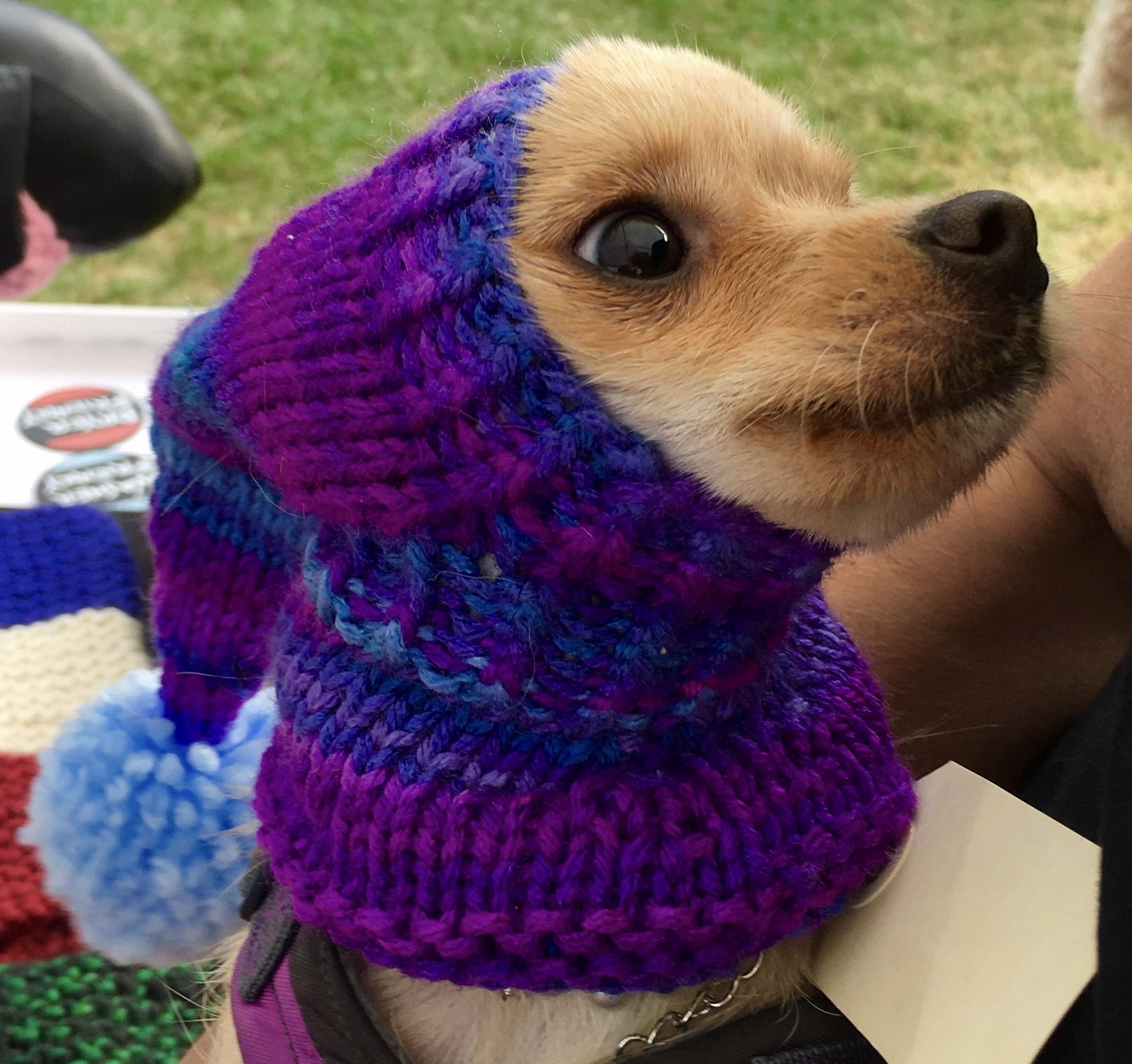 Chihuahua Hat Knit Warm Good Stretch Great Fit Snood Small Dog Hat Custom Made Dog Fashion Cute Hat Dog Hat Dog Sweaters Cute Hats