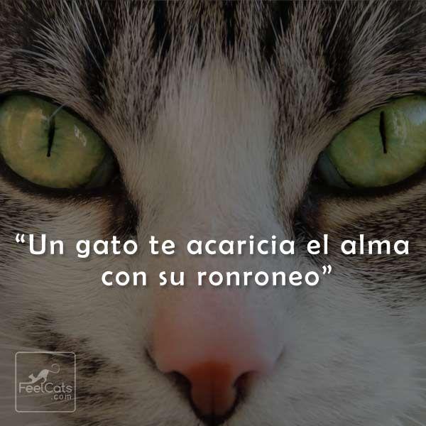 300 Ideas De Gatos En 2021 Gatos Gatitos Lindos Mascotas