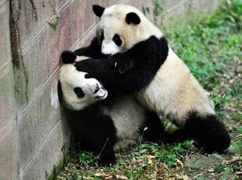 Animal Lovers - Community - Google+