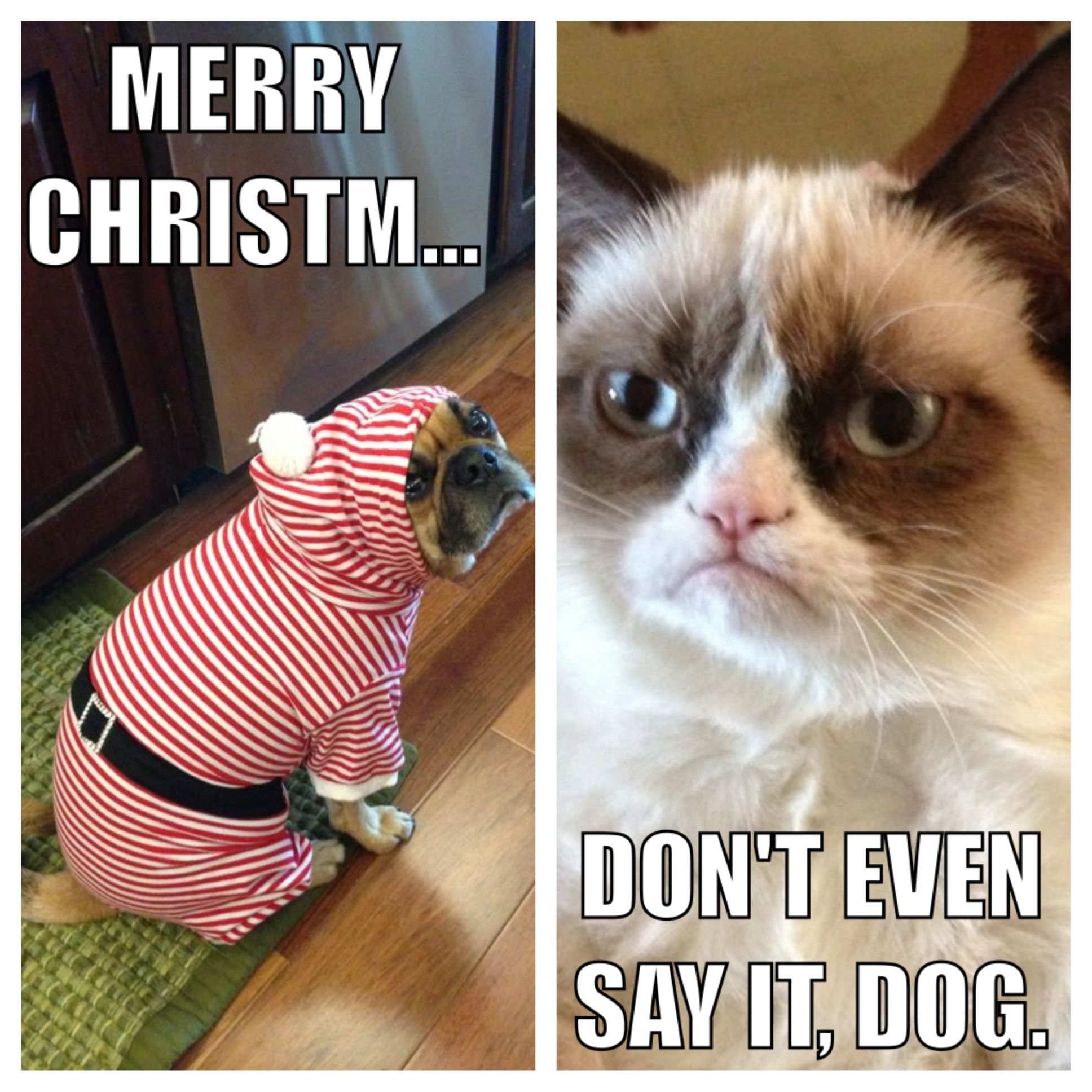 Grumpy Dog and Angry Cat talk Christmas. Grumpy dog, Cat