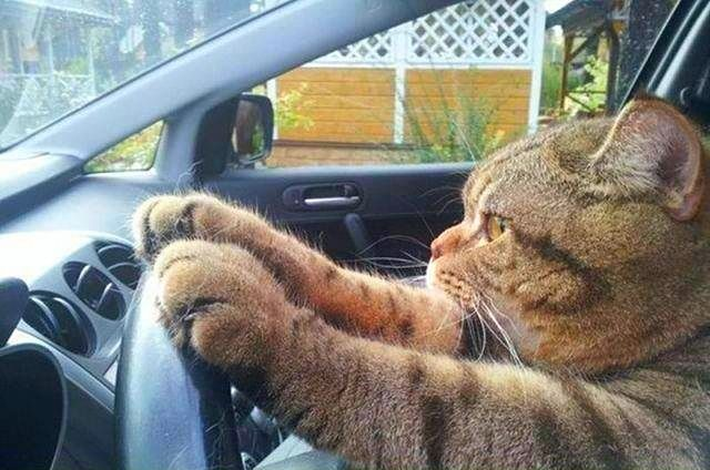 Cathy Cat has just passed her drivers test.....