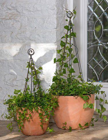 Cone Topiary Frame Small Gardener S Supply Company Topiary