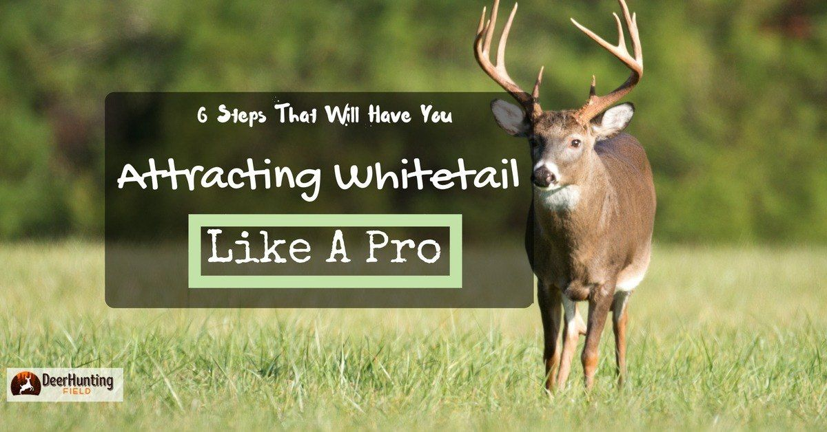 what is the best way to attract big bucks