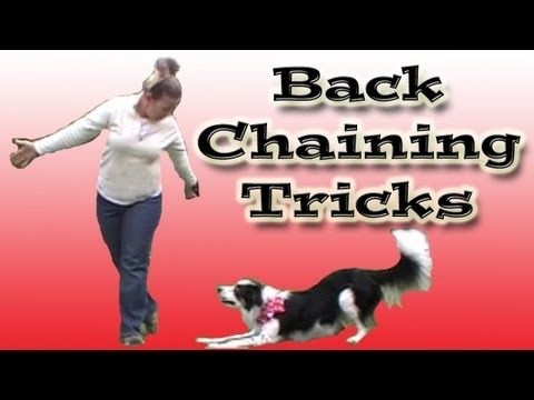 Backchaining In Dog Training Dog Training Training Your Dog