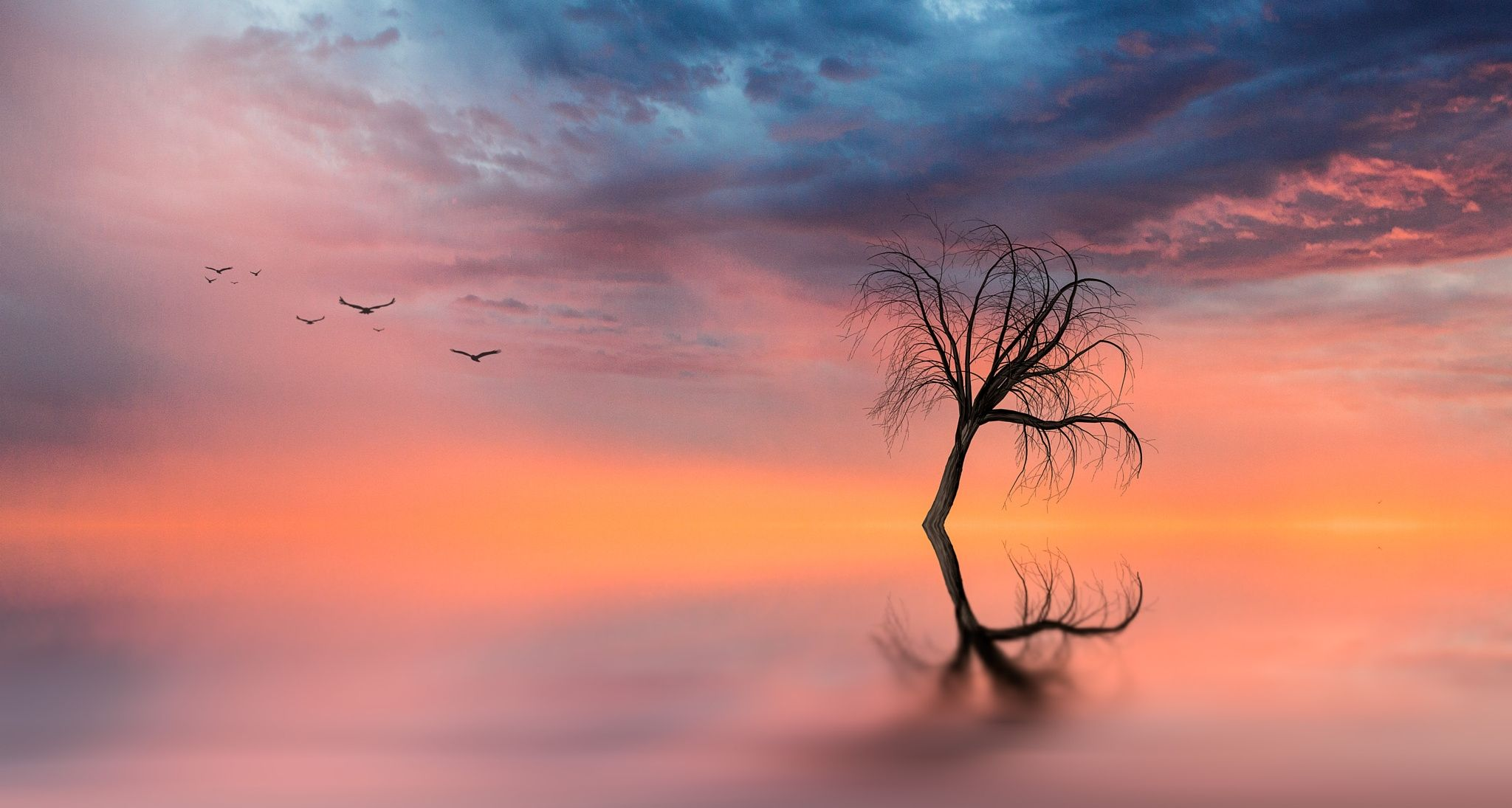 Calm - Creative Art - A calmness on the water creates a reflection from the dead tree. A dream.
