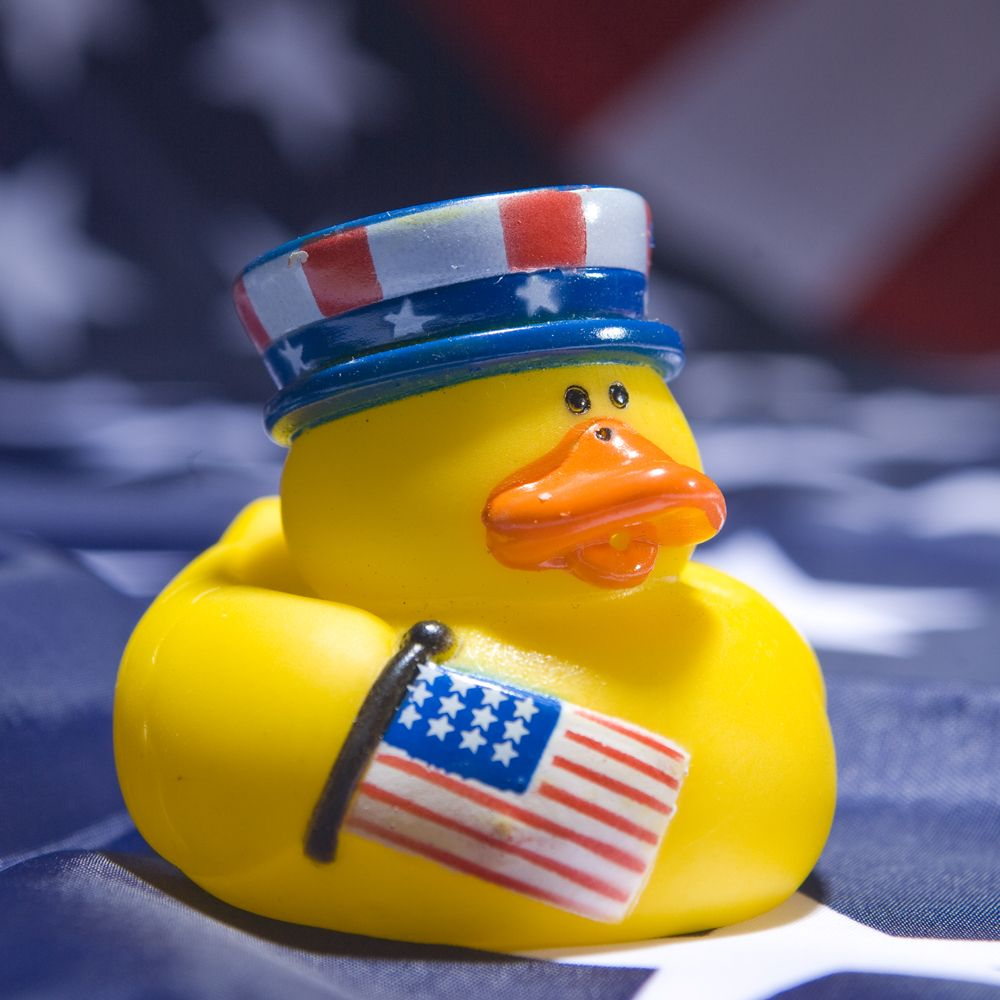 Image result for 4th of july duck