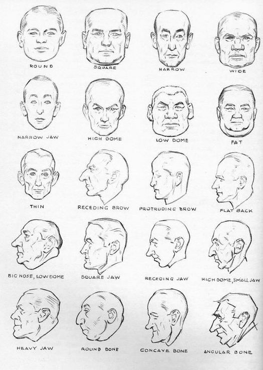 Head Shape Names By Andrew Loomisg 525737 Piksel Drawing And