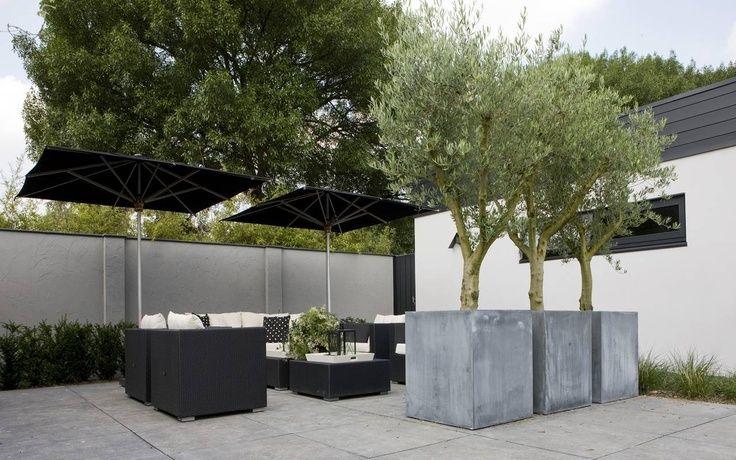 Olive Trees In Large Contemporary Concrete Planters U2013 Fotos Van Diverse  Aangelegde Tuinen U2013 Martin Veltkamp
