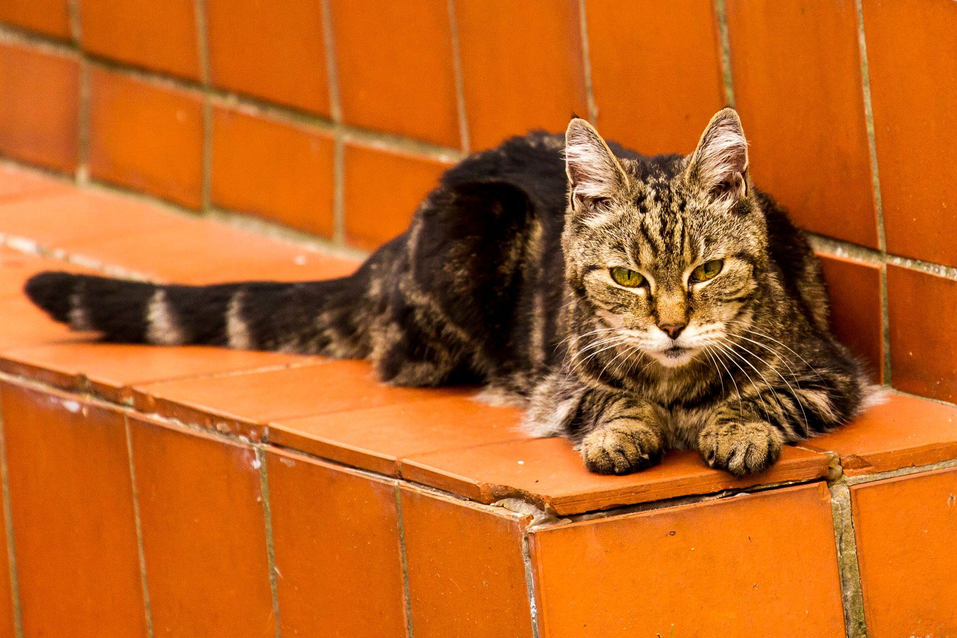How long do cats live aging and your cat vetbabble