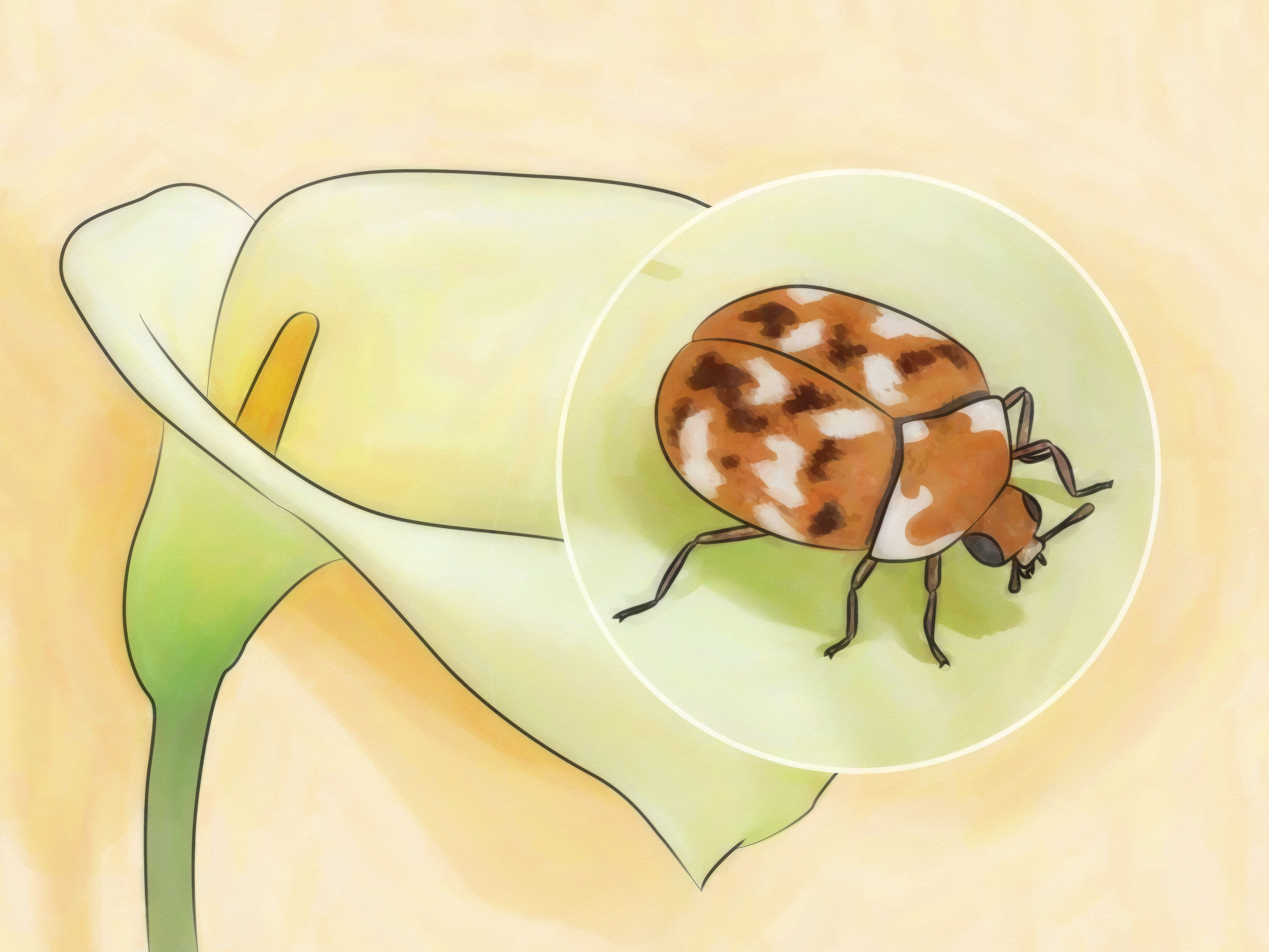 Different Types Of Carpet Beetles