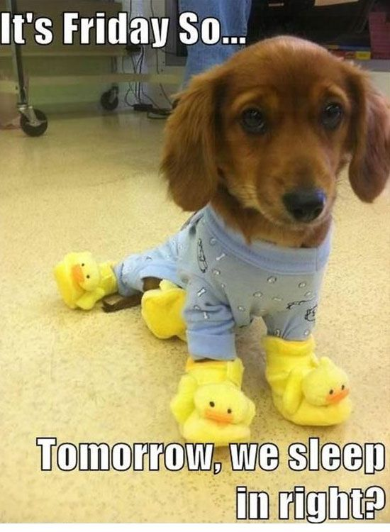 Tomorrow We Sleep In... - Funny Animals with Captions LOL