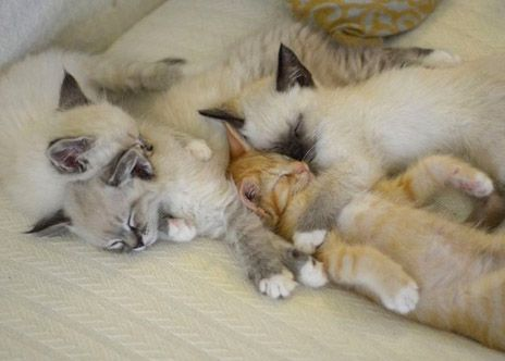 Can It Get Any Cuter Hint Yes Pets Cuddling Kitten Pictures Cute Animals