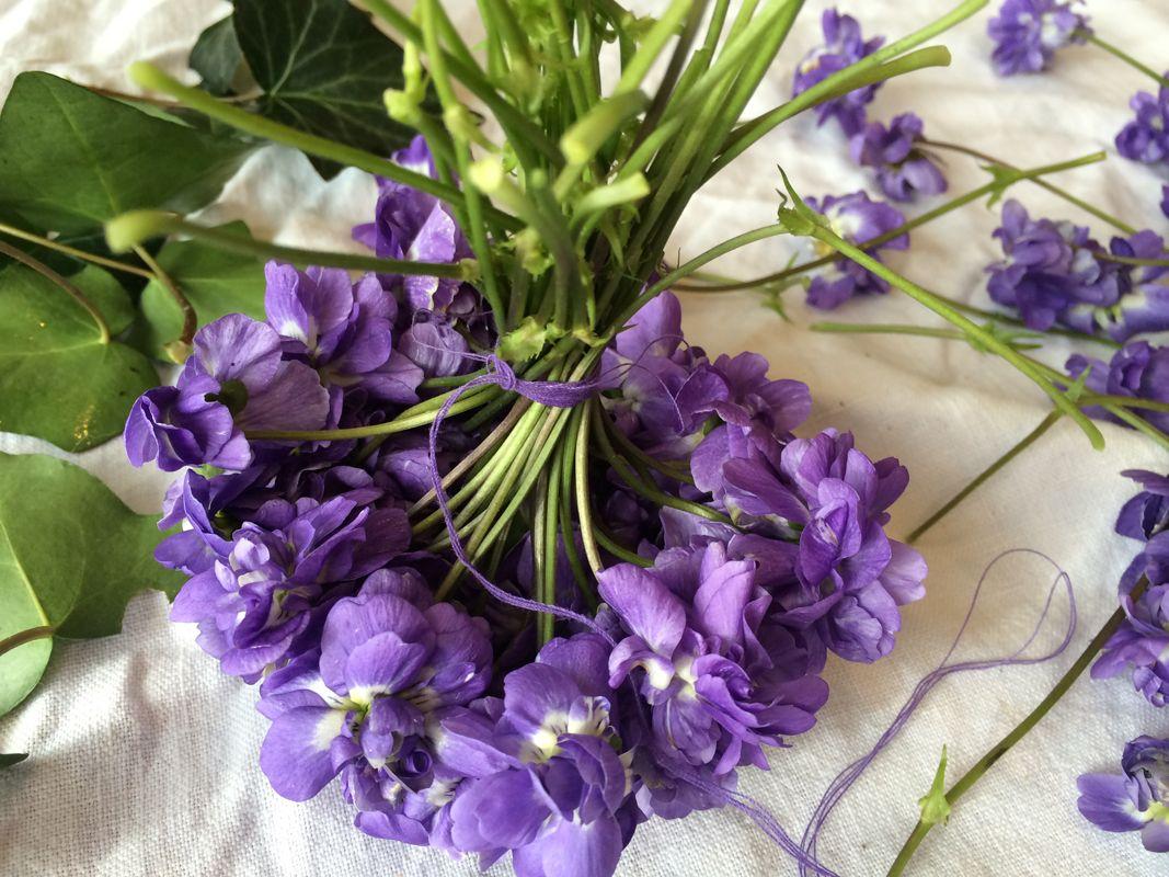 La violette de toulouse est une plante vivace d ext rieur for Maison violette toulouse