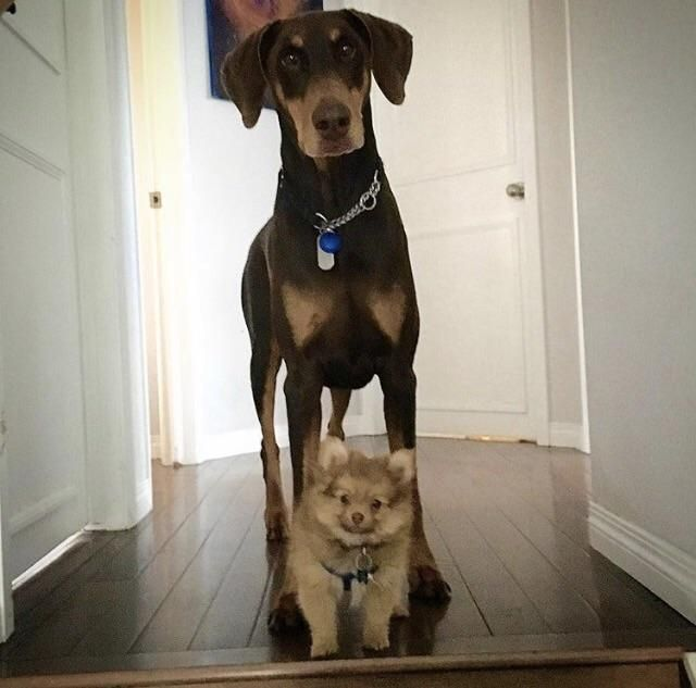 Protective of his little brother. http://ift.tt/2n84VST