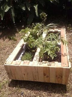 Raised Garden Made From Pallets      -   #pallets    #diy
