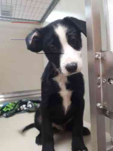 Petfinder Petadoption In 2020 Pet Adoption Pictures Dog Adoption Pet Adoption Center