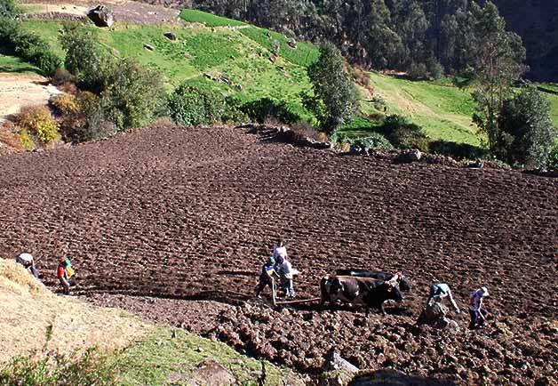 """""""Los suelos no tienen voz y pocas personas hablan por ellos """", señaló José Graziano da Silva, Director General de la FAO."""