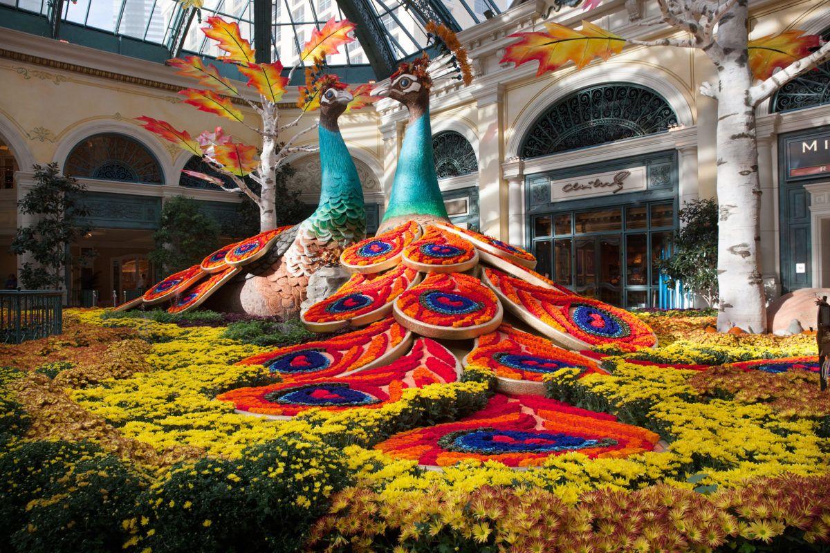 c49bd1b287c44933005a50e9bb857b54 - Bellagio Conservatory And Botanical Gardens Vegas