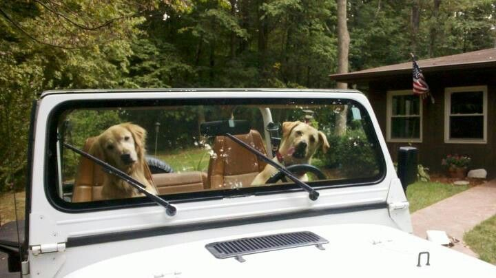 How Much Is That Doggy In The Window Jeeps Autos