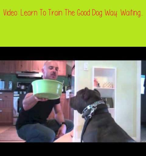 Learn To Train The Good Dog Way Waiting For Foodhey All You