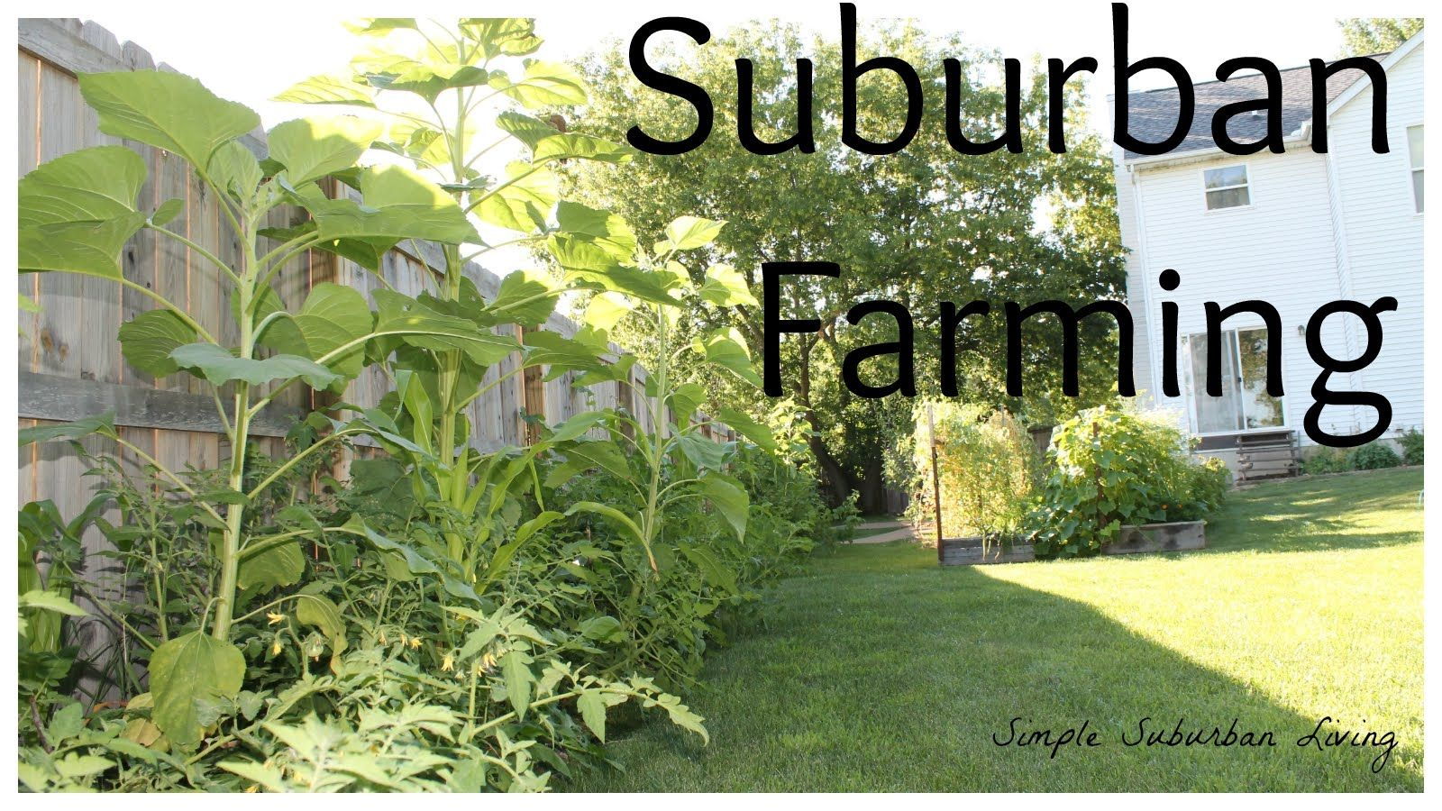 Suburban Farming - Farming with limited space in mind