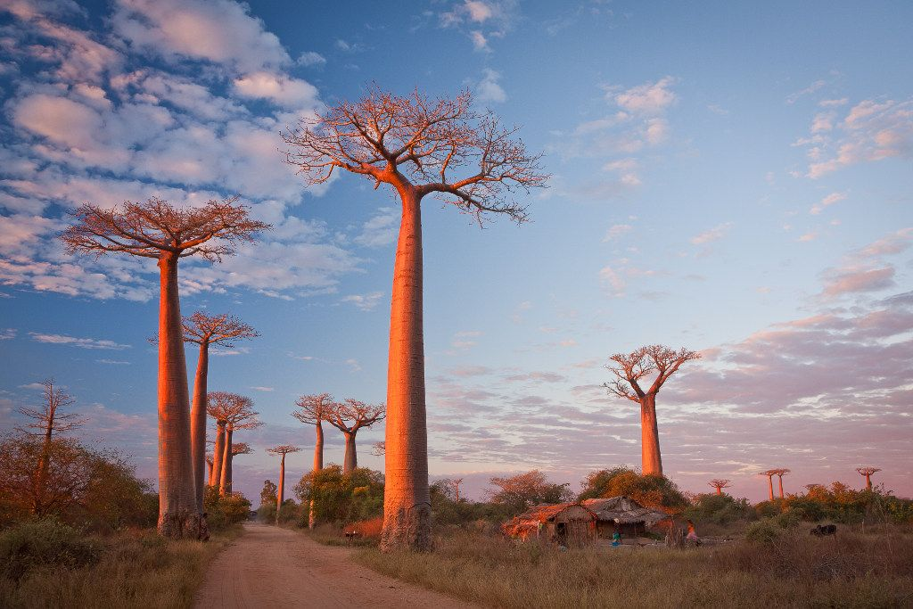 Red Giants by Florian Breuer - Antsiraraka, Madagscar