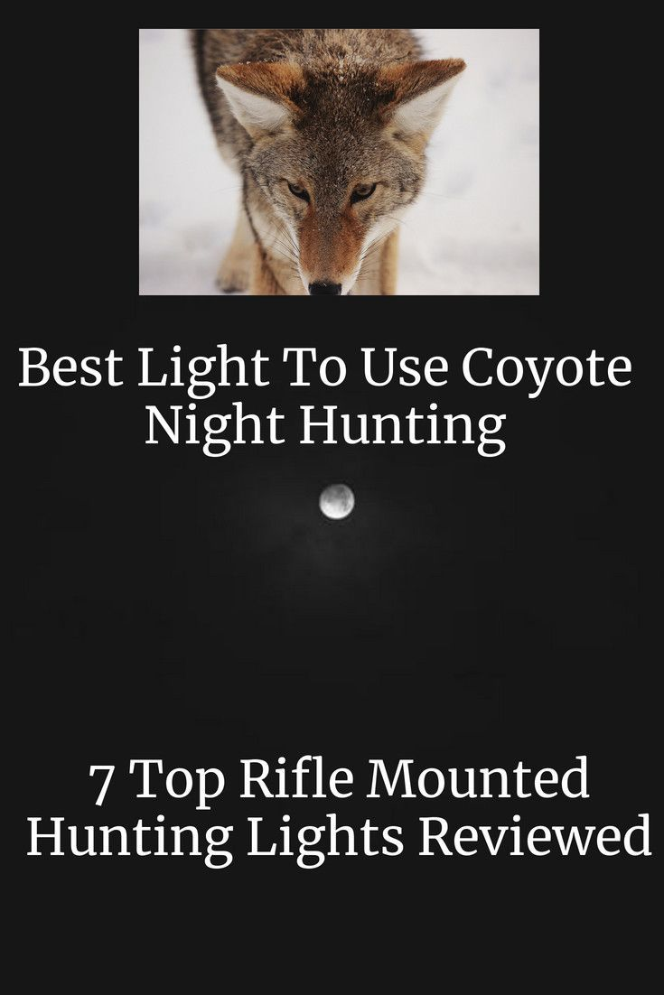 Which Is The Best Light for Coyote Night Hunting coyote Which Is The Best Light for Coyote Night Hunting coyote