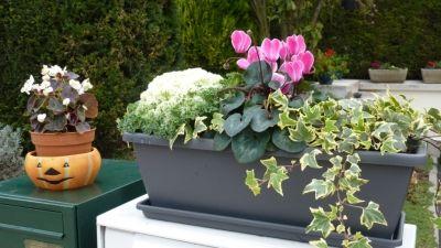 Fleurs jardiniere automne - Jardiniere automne hiver ...