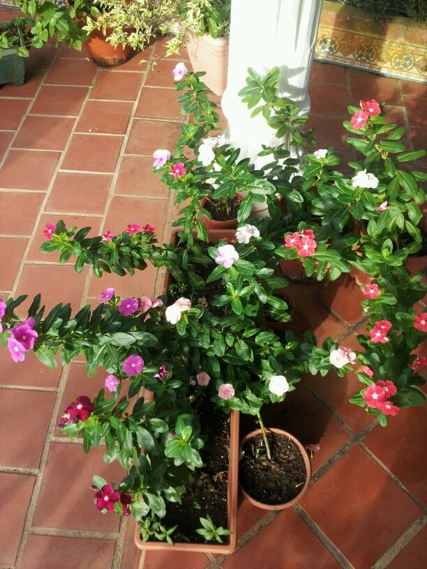 Mi jardin.
