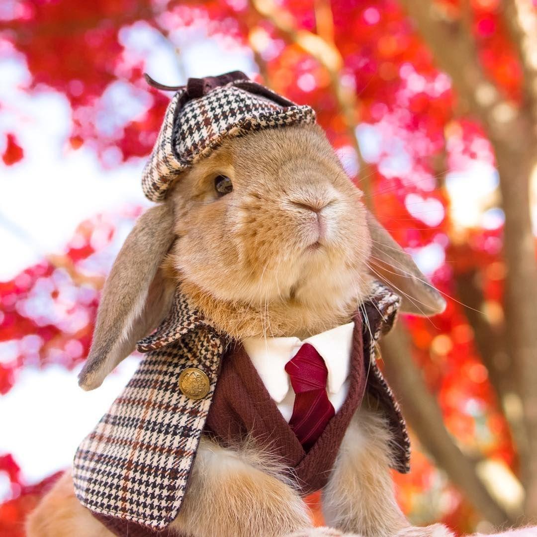 Sherlock rabbit Pet halloween costumes, Pet costumes