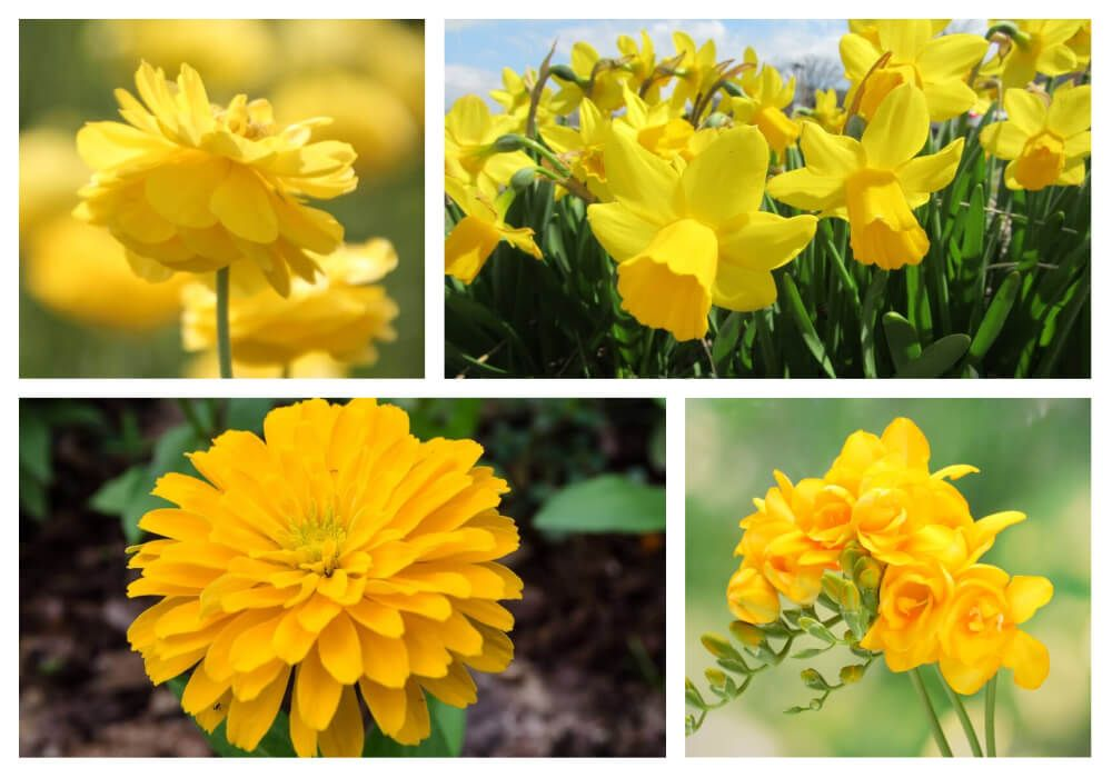 30 Types Of Yellow Flowers A To Z Photos And Info Tree With Yellow Flowers Yellow Flowers Labyrinth Design