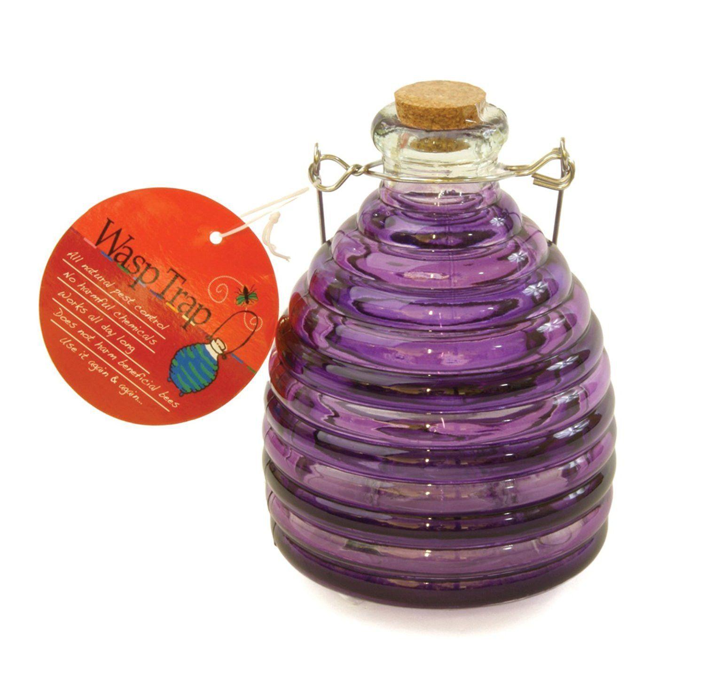 Toland Home Garden Large Purple/Grape PesticideFree 5.5