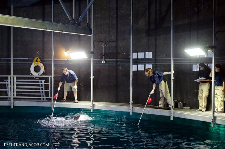 Feeding sharks at the mandalay bay shark reef aquarium