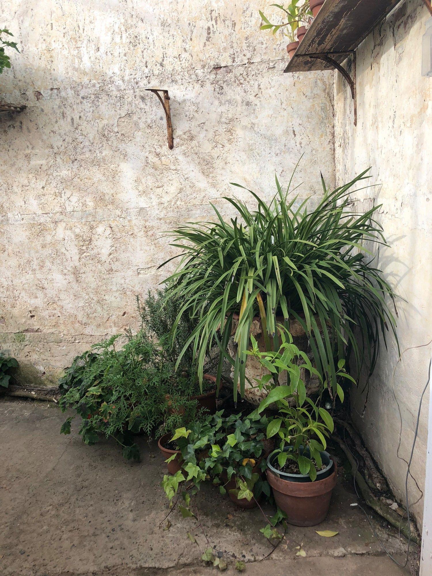 Lyman Estate Greenhouses Orchid house, Buy plants