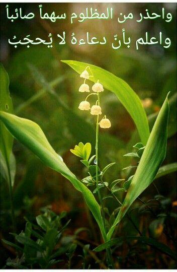 دعوة المظلوم لا ترد Lily Of The Valley Beautiful Flowers Flowers