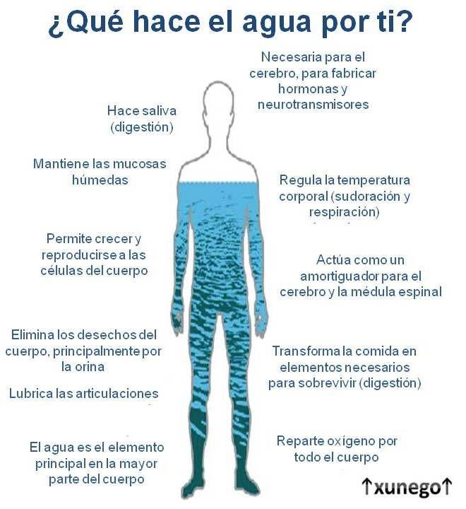 Qué Hace El Agua Por Tí Beneficios De Beber Agua Beneficios Del Agua Recetas Para La Salud