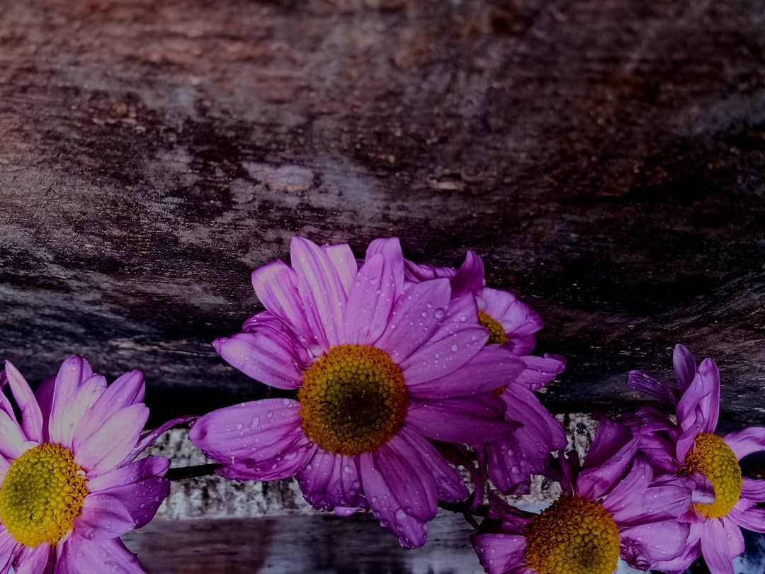 #fotografias #foto #fotografas #naturezaperfeita #natureza #arte #clicknaquarentena #art #everydaybrasil #everydayeverywhere #everydaylatinamerica #brazil #brasil #womenphotographer #womenphotograph #yourshotphotographer #photography #nature #naturephotography #flowers #flowerlovers