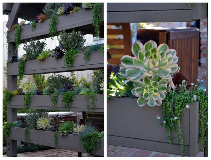 plantas suculentas salones
