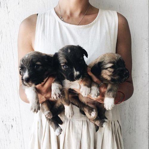 ᑭiᑎteᖇeᔕt Gabymichelx Dogs Puppies Cute Animals