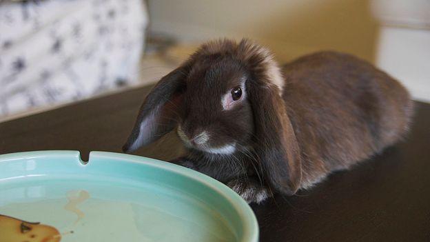 Come celebrare la giornata internazionale del coniglio