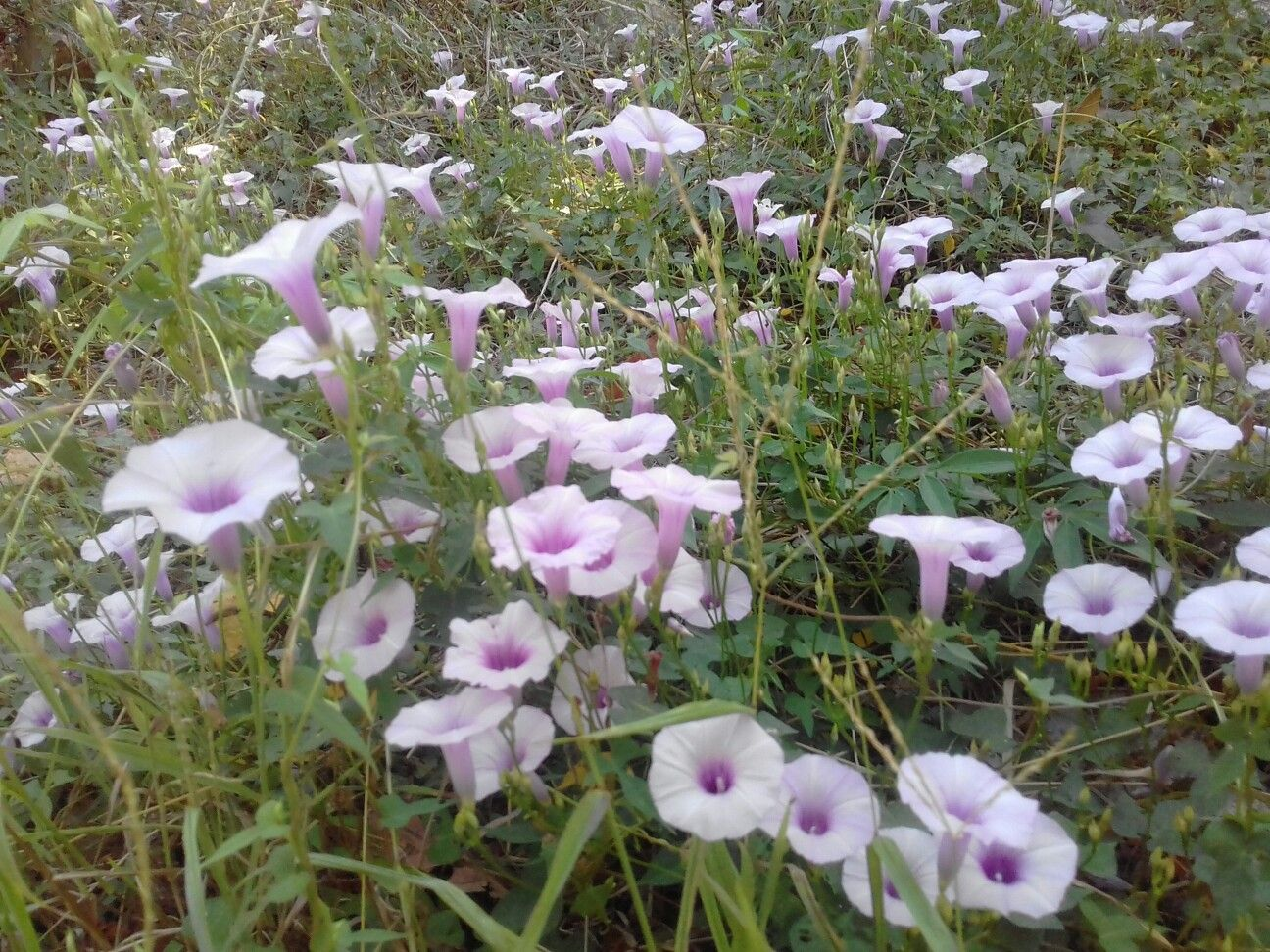 Flores moradas de verano 😍
