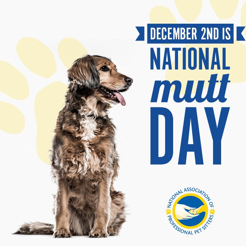 National Mutt Day Is A Day That Celebrates The Many Various Mixed