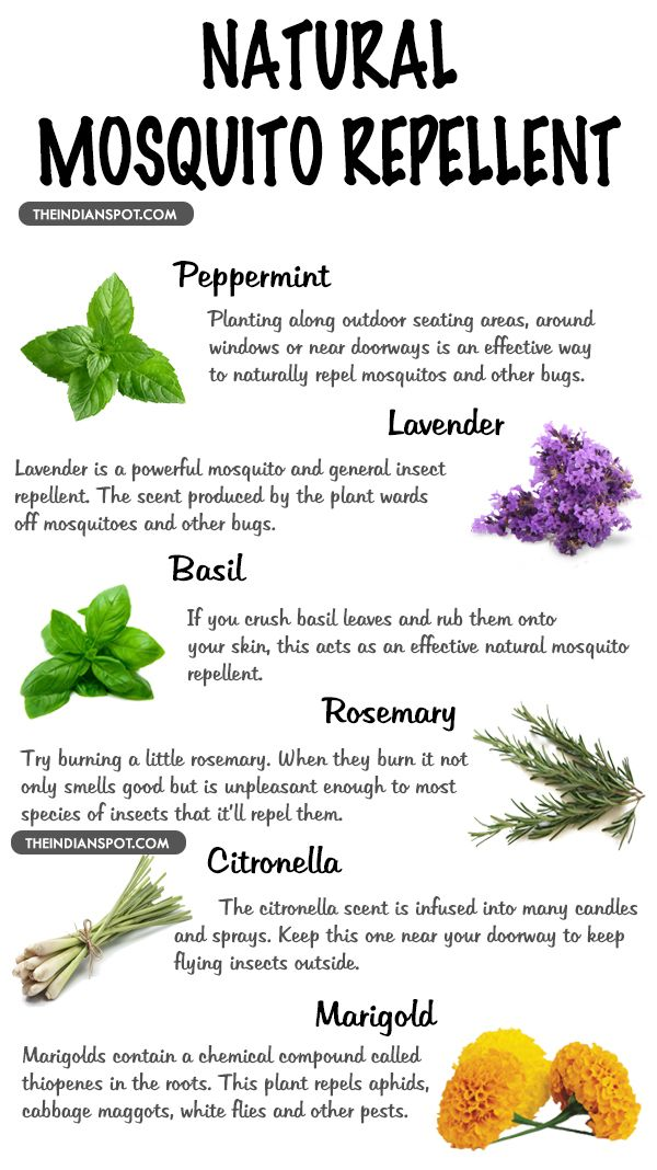Plants That Repels Mosquitos And Insects Mosquito Repelling